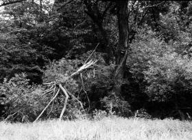 prchající Stromovous